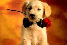Sweet puppy !!! / by Aéon
