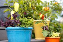Gardening / by ZEIT ONLINE