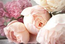 flowers / by Kim Grey