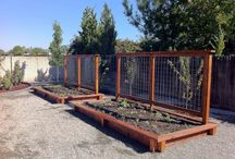 vegetable garden / by Carrie Cordill