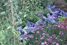 gardening / by Janet Bryson