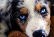 Puppy Love / by Natalie McCormick