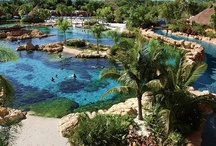 Discovery Cove Orlando / No crowds. No turnstiles. Imagine a place where you and your family can touch and swim with dolphins, wade with mysterious rays, snorkel among thousands of exotic fish, hand-feed tropical birds in a free-flight aviary and relax on pristine beaches. Discover an all-inclusive day resort experience that's one of a kind. / by SeaWorld