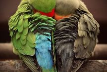 Birds / by Patricia Pruitt