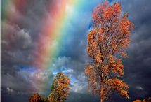 Rainbows that color our World  / Rainbows, coloring what ever crosses it's path.  / by Mary Costello