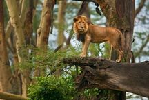 Africa Wildlife Photos / Favorite animals and wildlife photography on the Africa sarafi. / by Photography Spark