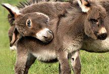 donkey love / donkeys / by judi bianca