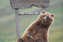 Grizzly love / by Traci VanArsdale