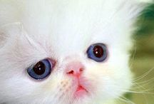 Kitties! / by Connie Calheta