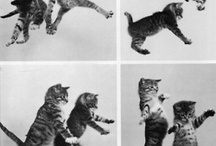 I LOVE CATS ! :) / by Catherine Johns