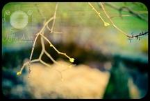 KellyAnnePhotography / My photography work... / by Kelly Poynter