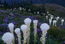 Flower Power / by D'Jne Reed