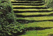 A Carpet of Moss / by Zippy Pins