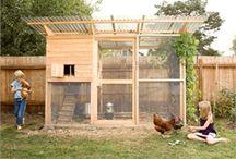 Chicken coops / by Connie Morgan