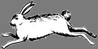 Rabbit  / Years: 1903, 1915, 1927, 1939, 1951, 1963, 1975, 1987, 1999, 2011 / by Aligned Signs