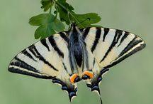 Butterflies / Moths / by Debra Mikalauskas