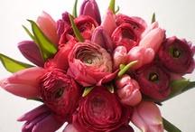 Beautiful flowers / by Cynthia Frye