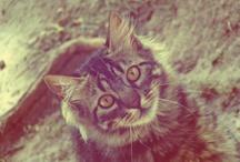 Cats *-* / by Anelise Schütz