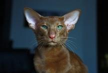 Cats / by Linda Kloran