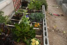 Square Foot Gardening / by HomespunSprout