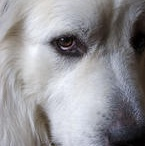 Great Pyr / by Carrie Nalley-Watson