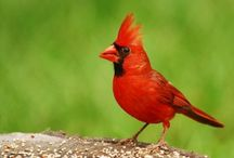birds / by Jayne Correll