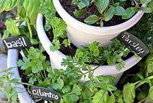 Herb Garden / by Erika Sanchez