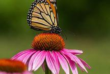 butterflies / by Joann Corsin Liszewski