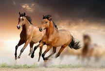 horses / by Deb Davidson