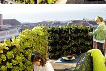 Garden / by Collablog by Cristina Saviotte-Wood