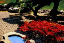 Japanese Gardens / by antonio Aguilar