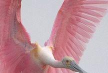 Beautiful Birds / by Effie Smith