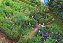 my garden ideas / by Harmonie Noble