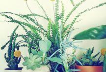 Plantas  / by Katie Hayes