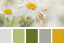 color palettes / by Bethany Stellpflug