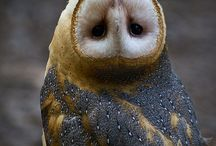Owls <3 / by Vanessa German