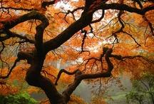 Nature / by Tiffany Murphy
