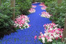 Outdoor & Garden Ideas / by Annette Esquivel