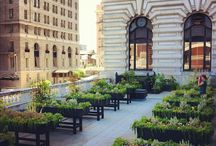 Fairmont Honey Bees & Herb Gardens / by Fairmont Hotels & Resorts