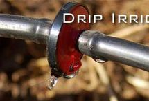 Drip Irrigation / by Plant Care Today