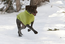 Ruff Wear Dog Gear / by Old World Limited