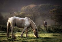 Horses / by Jessica Hollister