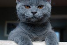 Kitty Galore / by Keyhé Delsink