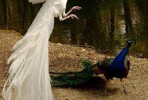 Peacocks & Monkeys  / by Madalyn Mychelle
