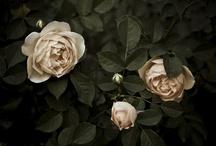 """Botany - Photography by me, Deborah Triplett / Photographs taken by me, www.deborahtriplett.com. Mostly taken in my own backyard which I call """"Flowerhead  Farm"""".  / by Deborah Triplett"""