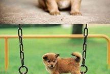Pets / Animais / Animalitos / by Priscila Matz