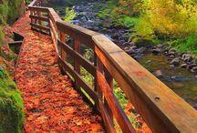 Oregon / by Noelle Cervantes