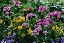 Garden / Flowers , flores jardin / by Mayela Lozano