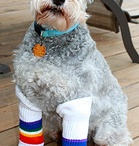 Rainbow Dogs! / by Pride Socks