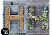 Succulents / by Molly Sims